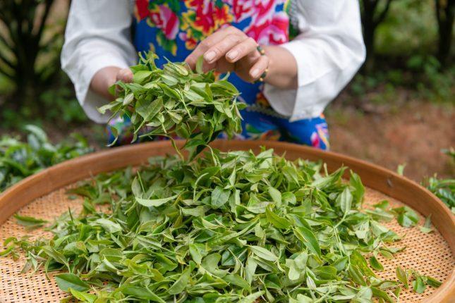 té en China